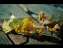 Cat Stevens - How Can I Tell You Lyrics on screen - Remastered HQ - YouTube