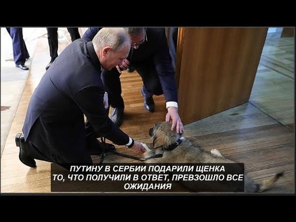 Путину в Сербии подарили щенка. То, что получили в ответ, превзошло все ожидания. № 1034