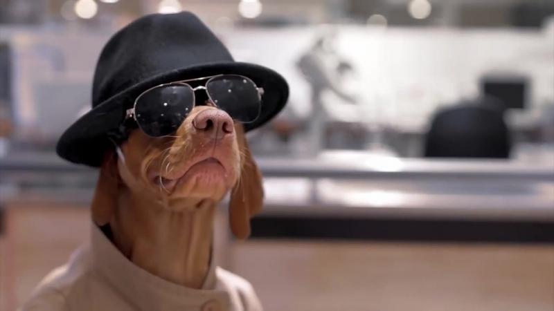 Новые лакомства для собак Bosch Fruittees