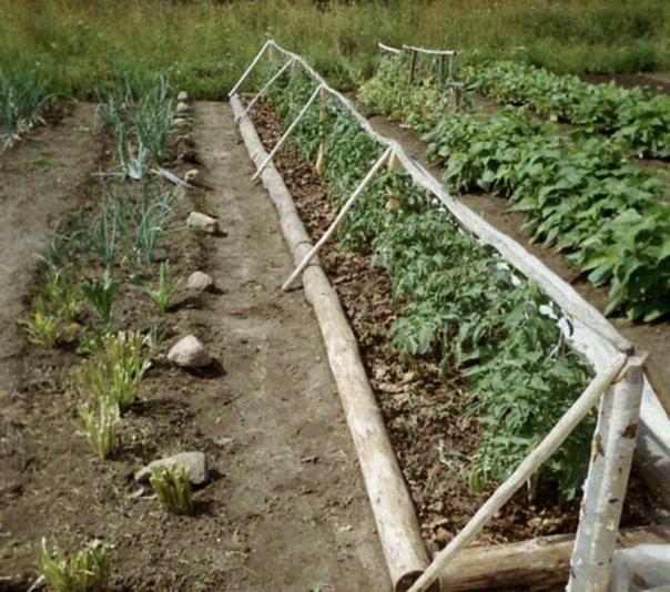 ВЫРАЩИВАЕМ ТОМАТЫ БЕЗ РАССАДЫ При дефиците времени весной иногда можно отказаться от рассадного периода. При этом отпадают хлопоты с подготовкой горшочков, пропариванием земли, ежедневным