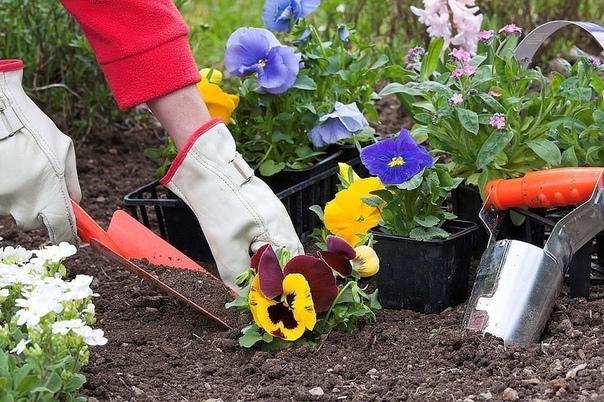 ХОТИТЕ-ВЕРЬТЕ,ХОТИТЕ-ПРОВЕРЬТЕ ! Народные приметы для садоводов-огородников - Картофель нельзя сажать на Вербной неделе, по средам и субботам - будет портиться. - Если весна ранняя, то капусту,