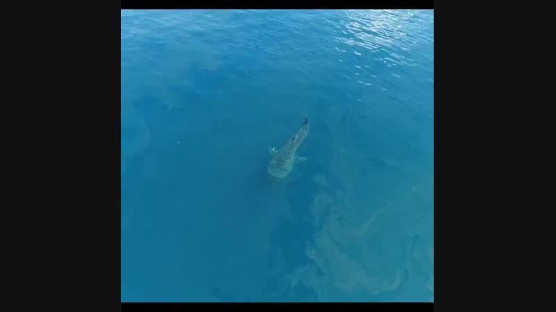 китовый пылесос