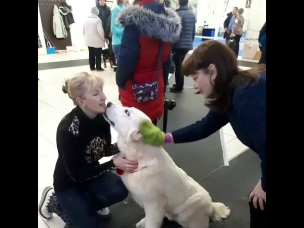 Варежка Твист Гринвей чистит животных