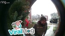 Squirrel Says Hello to UPS Delivery Driver || ViralHog