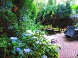 Вот такое у нас лето в этом году - теплое..жаркое..солнечное .Мой сад . Нидерланды .