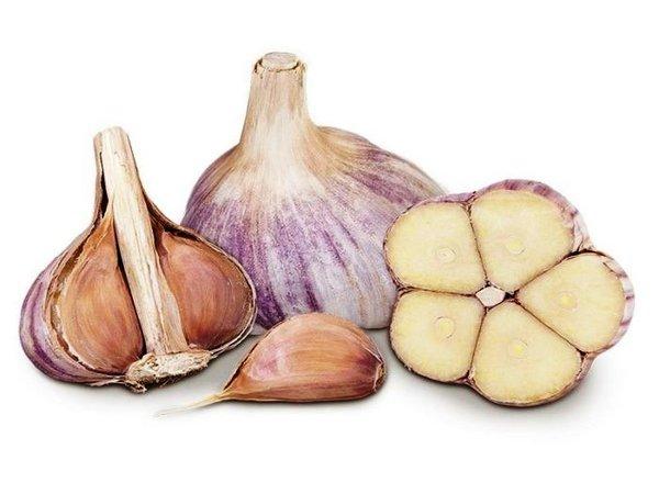 Озимый и яровой чеснок - в чём отличия Как выращивать яровой чеснок