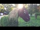 Деревья пилят сирень срубили опять лошадки Где проект и кто в ответе
