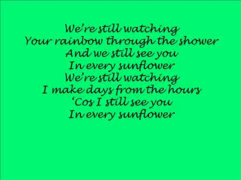 Bell X1 - In Every Sunflower