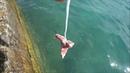 사람 손길 닿지않았던 물고기 들에게 돼지뼈 를 넣어 주었더니