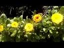 Ирина Одарчук Паули-Симфония №50 ля мажор в двух частях исполняет автор