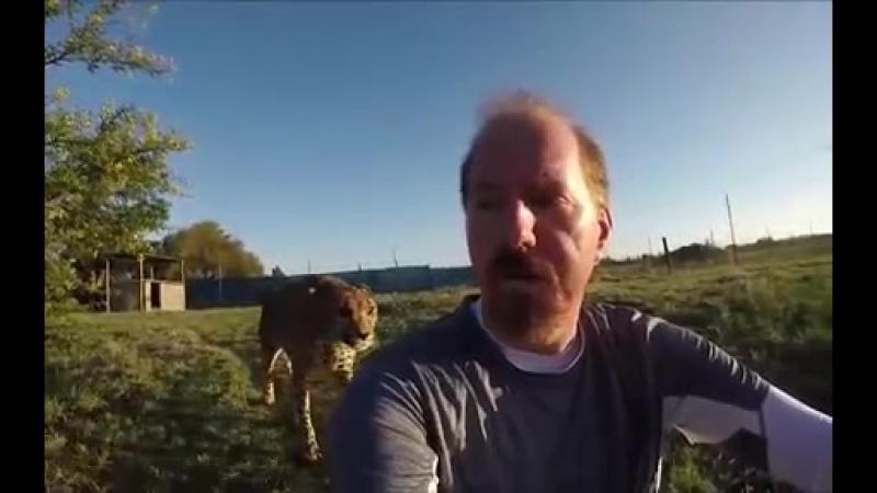 Мужчина повернулся к гепарду спиной, и вот чем это закончилось