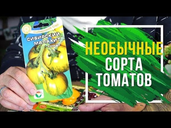 Самые необычные сорта томатов 🍅 Выбираем семена помидор 2019 помидоры огород дача интернет-магазин