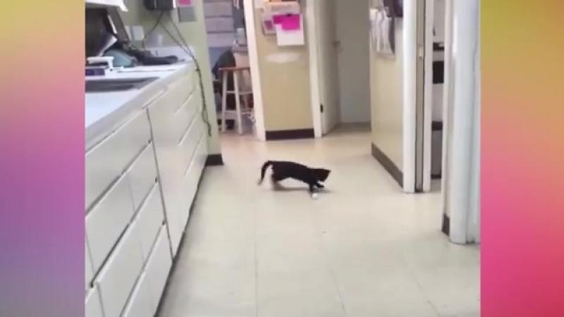 Попробуй не ЛОПНУТЬ со смеха challenge - Смешные коты 2017. Постарайся не рассмеяться до слез