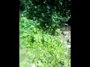 Video-2013-06-15-17-13-57.mp4