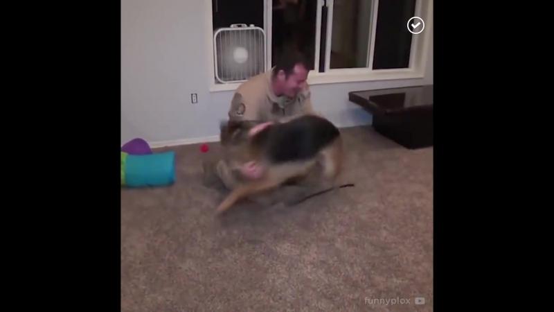 Самые любящие собаки в мире (1080p).mp4