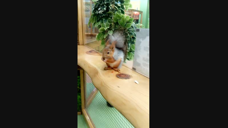 бнлочка,,контактный зоопарк