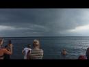 Дельфин ... во время шторма они подплывают очень близко к берегу и людям