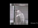 ПОПРОБУЙ НЕ ЗАСМЕЯТЬСЯ - Смешные Приколы с Животными до слез, смешные коты, funn