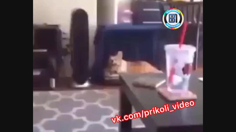 Когда завёл животное