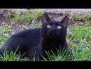 Жанна Агузарова, Группа Браво - Черный кот