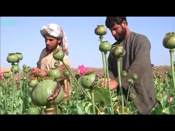 Чьи спецслужбы «крышуют» афгано-иракский наркотрафик