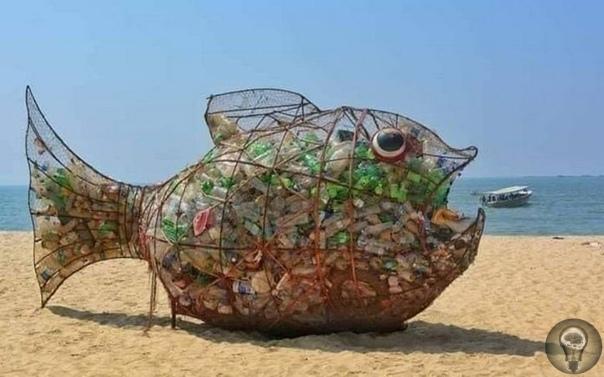 Гигантская рыбка Йоши  уникальная «игрушка», которая удивительным образом поддерживает чистоту на индийском пляже