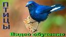 Птицы, Развивающий мультик, Фото птиц, Названия птиц, Пение птиц, Обучающее видео для детей [HD]