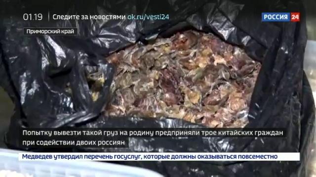Новости на Россия 24 Таможня испортила Новый год Китаю на границе изъяты 867 медвежьих лап