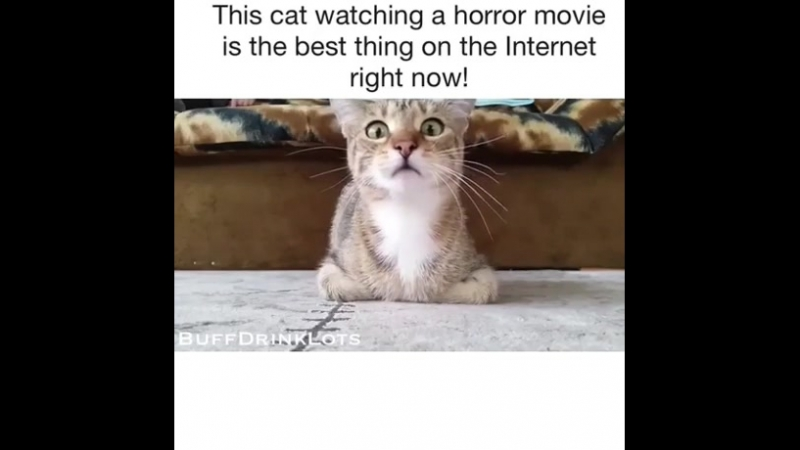 PUSSY watching a horror movie