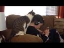 Happy Day ПРИКОЛЫ С КОТАМИ И КОШКАМИ Подборка смешных и интересных видео с котиками и кошечками