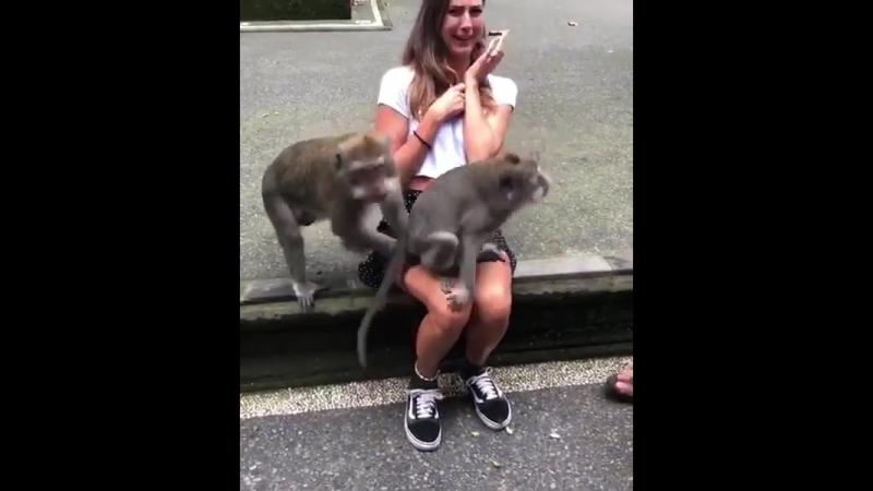 Две любвеобильные обезьяны смутили молодую туристку)