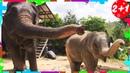 Влоги ИГРАЕМ ВМЕСТЕ со Слоненком Как и Мама Корпим слоника и играем с ним Vlog Маленький блогер