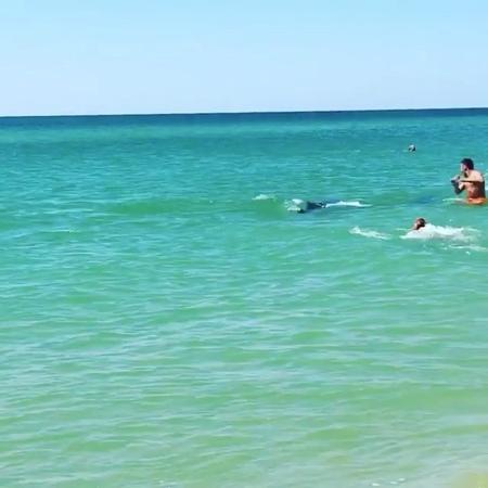 """🌊Новороссийск - Наш Город on Instagram: """"🐬Бугазская коса не связи! А вы когда-н видели так близко дельфинов? Автор: @nazarovii. ⠀ Присылайте свои ф..."""