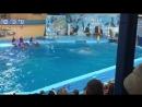 Выступление в дельфинарии Архипо-Осиповки