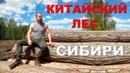 Павел Пашков предварительная информация о вырубках леса в Сибири
