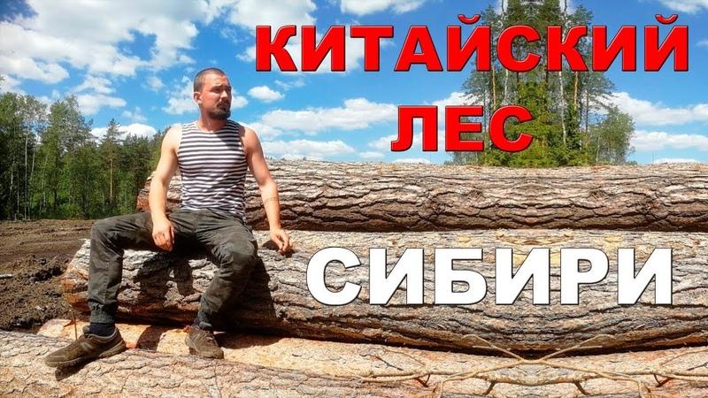 Павел Пашков - предварительная информация о вырубках леса в Сибири