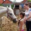 """Приют для старых лошадей """"Уникум"""""""