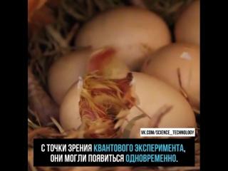 Что же появилось раньше, курица или яйцо?