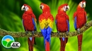 Colorful Macaw Parrots Stunning Birds 🐦Sleep Relax Forest Ambient Sounds 4K UHD TV Screensaver