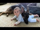 Cachorro Pastor Alemão Protege Bebês e Crianças Compilação Cães Que Protegem