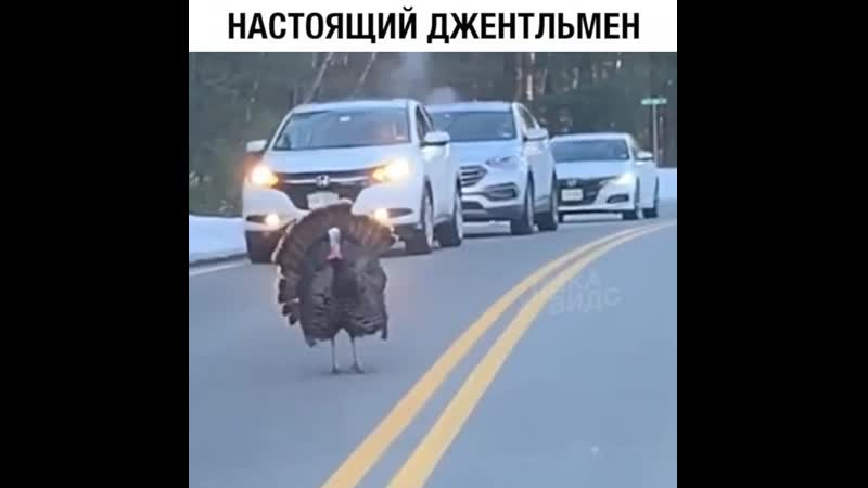 индюк ))