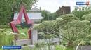 Миллион за борщевик избавиться от ядовитого сорняка попробуют с помощью штрафов