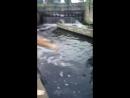 2 Сальто в воду