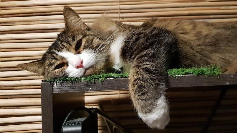 10 минут отборного стрессирования котика совой. lva-Owl vs Murlock-Cat