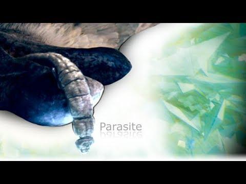 Primeval - parasite