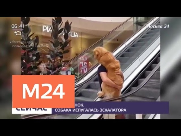 Собака испугалась эскалатора - Москва 24