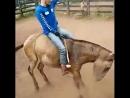 Оседлал коня.😃😃😃
