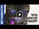 Коты Инопланетяне. 👽 ШОК ! Теория Дмитрия.К доказана! Человечество в опасности!