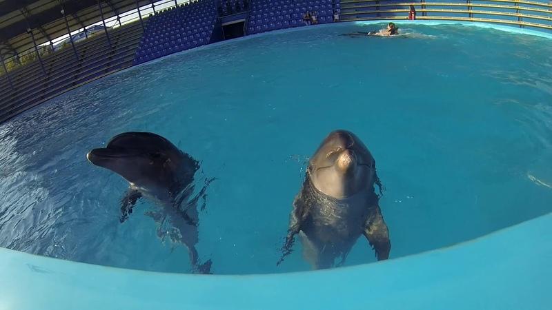 Плавание с дельфинами в Архипо-Осиповке