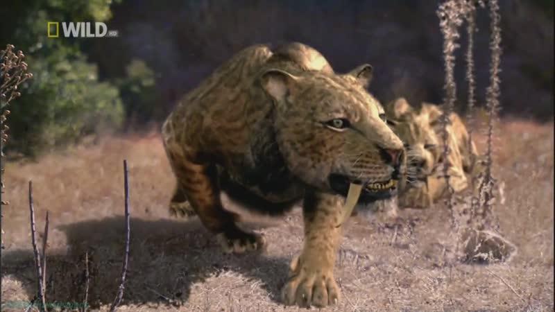 Доисторические хищники — Саблезубый тигр